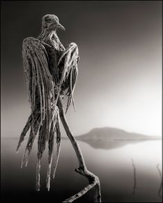 'Medusa' Lake Turns Animals to Stone In Greek mythology, Medusa was a monster with the face of a human female and a head of venomous snakes for hair. Gazing directly upon her would turn any creature to stone.  In northern Tanzania, Lake Natron has had similar effects—on birds in particular.  photographer Nick Brandt