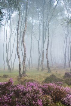 Misty Stanton Moor, Peak District, England by JamesMills1