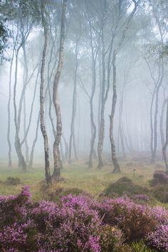 Misty Stanton Moor, Peak District, England by JamesMills1