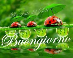 Buona giornata buona fortuna buon giorno pinterest italian zooya diamond embroidery diy diamond painting ladybug and green leaves diamond painting cross stitch rhinestone mosaic m4hsunfo