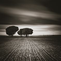 nº 0177 Torrecilla de la Abadesa, Valladolid, Spain. Photo Awards, Fine Art Photography, Surrealism, Spain, Country Roads, Black And White, Artwork, Artist, Plants