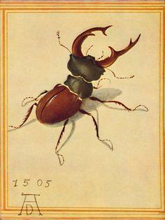 Hirschkäfer (Stag beetle) by Albrecht Durer, 1505