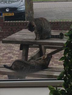 16-05-2017 Gypsy heeft een vriendinnetje. Haar buurmeisje 😄. Het lijken wel zusjes.