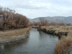 Owens River near Big Pine, CA. Caught many trout here growing up!