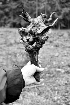 Samorost les podzim zima