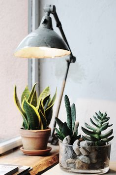Succulents and vintage lighting