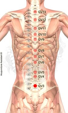 Point Localization: Below TCM Actions: Strengthens the lower back and legs. Indications: Low back pain and sciatica. Point Name and Meaning: Yaoyangguan – Lumbar Yang Gate Acupuncture Mer Acupuncture Points Chart, Meridian Acupuncture, Point Acupuncture, Acupuncture Benefits, Acupressure Points, Shiatsu, Acupressure Treatment, Back Pain Exercises, Circulation Sanguine