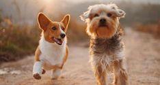 Πώς η Ολλανδία κατάφερε να γίνει η πρώτη χώρα χωρίς αδέσποτους σκύλους - Εναλλακτική Δράση