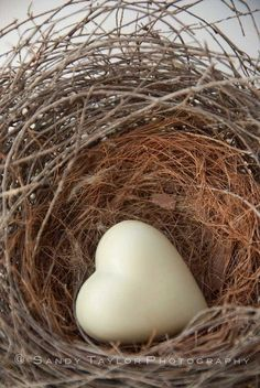 Heart in Birdnest - Jan's Page of Awesomeness! >.
