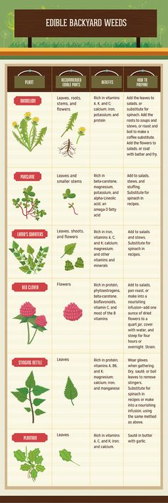 A guide to edible weeds.