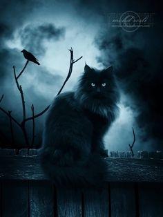 BLACK Cat at Night  ( Big Photo )