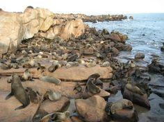 Punta del Este- Boat ride to Isla de Lobos to see Sea Lions