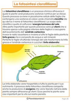 Diagram of the photosynthetic process science biology science schede didattiche sulla fotosintesi clorofilliana per bambini ccuart Image collections
