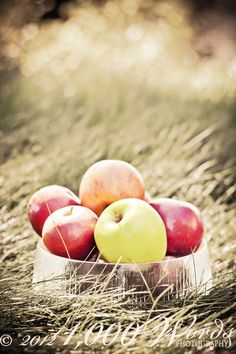 Falltime ~ Apples  :) ~ https://www.facebook.com/pages/1000-Words-Photography/229325343810597