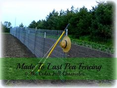 Gardening - Pea Fencing 101 | The Cedar Hill Chronicles | Learn how to make pea fencing that will last year after year.
