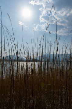 https://flic.kr/p/szJ6U6 | Lake Kawaguchi