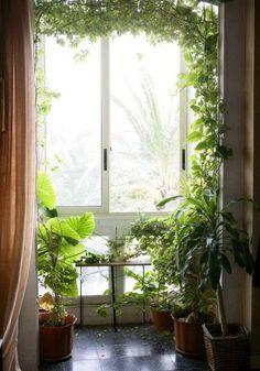 decoracion de interiores con plantas, fotos - Buscar con Google
