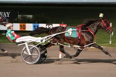 Jordan Stratton Poised to Win Yonkers' Series Finals