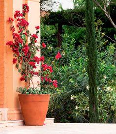 Jardim de casa em Porto Feliz tem horta, fonte e pergolado - Casa