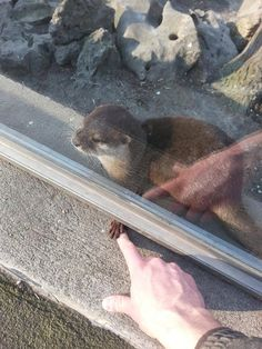 I want to hold an otter's hand!