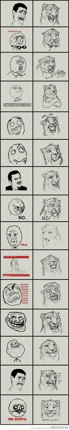 Jungle memes…
