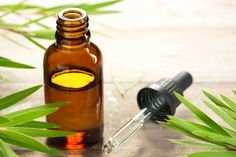 There are a myriad of tea tree oil benefits in today's society. Everything from acne treatments to clearing the air. Tea tree oil is a necessity in one's arsenal of natural medicinal products. Essential Oils For Gout, Frankincense Essential Oil, Tea Tree Essential Oil, Essential Oil Uses, Natural Remedies For Ants, Home Remedies For Acne, Treatment For Pcos, Spot Treatment, Flea Treatment