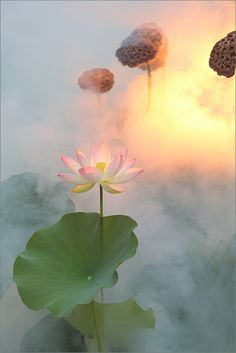 Lotus Flower Surreal Series - DD0A3054-1000