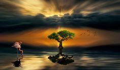 LONE TREE - Lone Tree as fine art