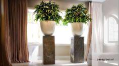 Hoogglans witte potten gevuld met kunst Bamboe op een bijzondere zuil.  De kunst beplanting is afkomstig van Maxifleur Kunstplanten BV, gevestigd in Rozenburg NH. Ook wij hebben een gehele Maxifleur kunstplanten afdeling in Ammerzoden.