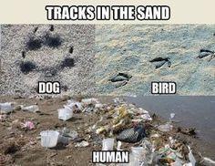 Tracks In Sand. Dog Vs Bird Vs Human