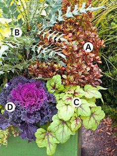 This arrangement's rich tapestry of fall color and texture happens without any flowers and will last well past first frost.  A.Coprosma'Tequila Sunrise': Shiny leaves with orangey hues exude autumn. Zones 9-11 B.Mahonia'Charity': Striking evergreen with vivid yellow flowers yields purple berries in winter. Zones 7-9 C.Heucherella'Stoplight': Lime green leaves with red splotches make this plant easy to combine with other ornamentals. Zones 4-9 D.Kale'Nagoya': A purple splash offers…