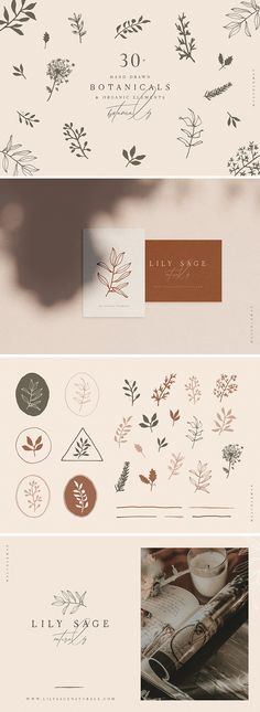 Hand Drawn Botanical Collection by Mel Volkman on Creative Market Botanical Illustration Collection Illustration Botanique, Illustration Blume, Graphic Illustration, Illustration Flower, Wedding Illustration, Creative Illustration, Graphisches Design, Layout Design, Pattern Design