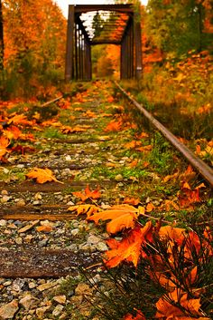 """""""Falling Again"""" ~ Photo by thorinside on Flickr ~ Autumn on Vancouver Island, Vancouver, British Columbia, Canada … notice the train tracks in the photo."""