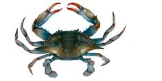 Crabbing in the Florida Keys Tackle Shop, Bait And Tackle, Florida Blue, Florida Keys, Fishing Shack, Lost Art, Coastal, Animals, Image