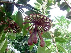 Alien Plants, Weird Plants, Unusual Plants, Rare Plants, Exotic Plants, Cool Plants, Strange Flowers, Unusual Flowers, Rare Flowers