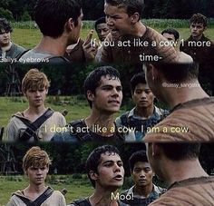 This is a book of sad and funny memes about the maze runner # Fan fikce # amreading # books # wattpad Maze Runner Funny, Maze Runner Thomas, Maze Runner The Scorch, Maze Runner Cast, Maze Runner Movie, Maze Runner Trilogy, Maze Runner Series, Hunger Games, The Scorch Trials