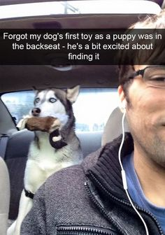 Everybody who owns a Husky knows they are the worst. These unenthusiastic and lazy dogs are incredibly boring to spend time with. Not only that, Huskies get Cute Funny Animals, Funny Cute, Funny Dogs, Hilarious, Cute Puppies, Cute Dogs, Dogs And Puppies, Doggies, Awesome Dogs
