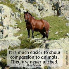 Animal Quotes - horse #AnimalQuotes #ANimals #Horses