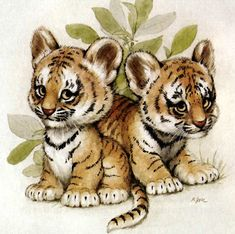 Zoo, Jungla, Selva Animales
