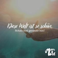 This world is so beautiful. SEE A LOOK - # Check more at rice . V Words, True Words, Words Quotes, Life Quotes, Diving Lessons, Germany Language, Mountain Quotes, A Kind Of Magic, German Language Learning