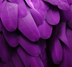Imagem de feather, green, and bird