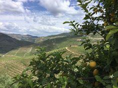 Sandeman - Quinta do seixo #portugal #wines #porto #portwinestain #douro #somelier #winespectator by labportugaltours