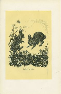 MARKED: 1944 Vintage Children's Print, Rabbits, Fox, Illustration, Book Plate, M Forster Knight, Yellow, Black