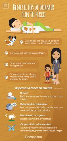 Estos son los beneficios de dormir con tu mascota, si quieres saber cómo debes aplicarlo solo da clic.   #pet #mascotas #salud #bienestar
