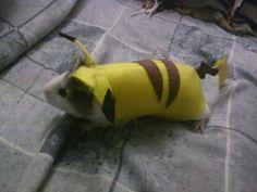 Pikachu guinea pig costume. I hate guinea pigs, but amazing non the less