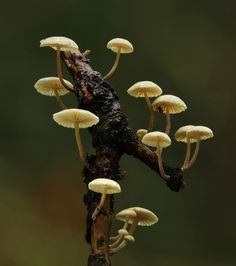Mushrooms by Cassilda Dias on 500px