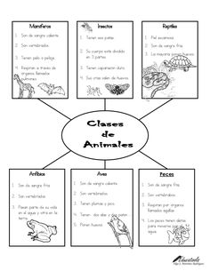 Mamíferos Insectos Reptiles 1. Son de sangre caliente. ... Teaching Science, Science For Kids, Science And Nature, Science Anchor Charts, Kindergarten Anchor Charts, Science Projects, Science Experiments, Kids Education, Special Education