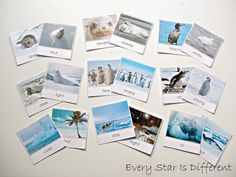 Antarctica learning activities and free printables for kids.