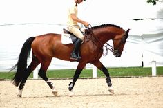 heels-down:this is how every horse should move, coming from the hind end and flexing the top line. So perfect.