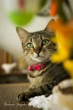 A fine example of Feline Beauty
